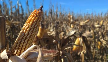 Impulsan la vuelta a la agronomía como herramienta de innovación