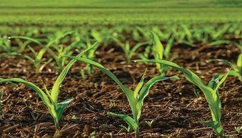 Un estudio de la UBA con una buena noticia sobre suelos pampeanos