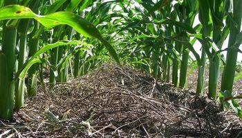 Aplicando fertilizantes: ¿Lo hacemos bien?