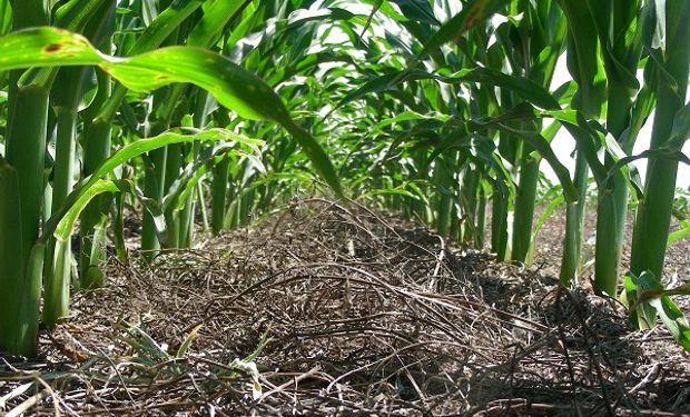 El Ing. Agr. Santiago Tourn presentará los resultados de la evaluación de aplicadores de fertilizantes y cómo se pueden corregir las fallas más comunes.
