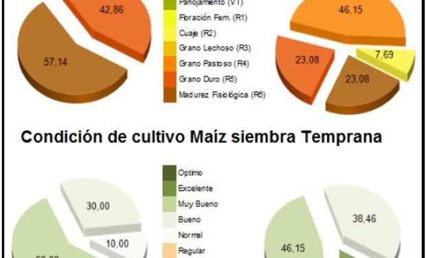 Estado fenológico de maíz de siembra temprana. Fuente: BCBA