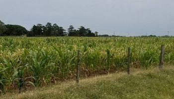 Recomendaciones para los maices afectados por los climas secos