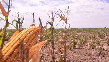 Santa Fe: soja y maíz de segunda, los cultivos más impactados por el período seco