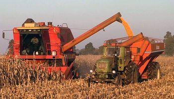 Se aceleran los negocios de maíz en el mercado local