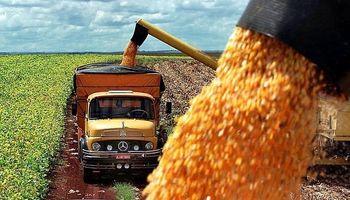 La safrinha de maíz es la carta de triunfo de Brasil