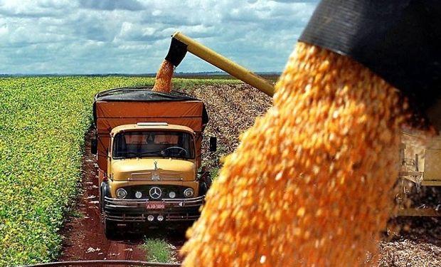 Brasil dispone de una cosecha tardía de maíz, conocida como safrinha.