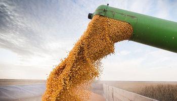 Cosecha récord: se producirá más maíz que soja por primera vez en 20 años