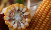 Se detectaron numerosos casos de facturación irregular en la venta de semillas