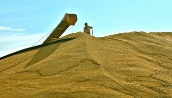 Buscan aumentar envíos de maíz argentino a México