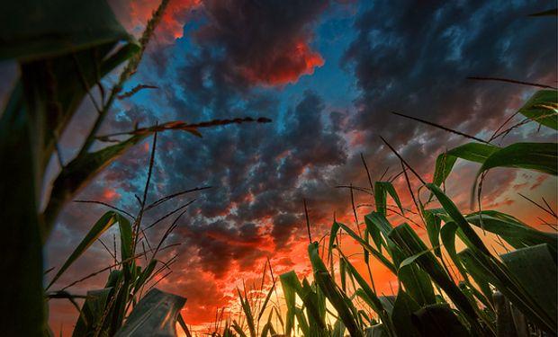 Bajas para el maíz ante las mejores previsiones meteorológicas.