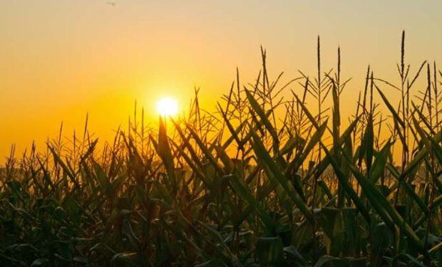 Perspectivas económicas en maíz para la campaña 2018/19.