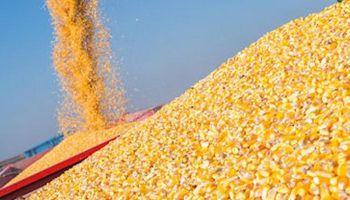 Récord: en 10 meses Argentina exportó 34,5 millones de toneladas de maíz