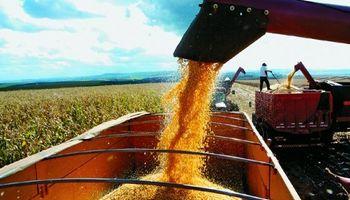 Anticipan una pronunciada caída del saldo exportable de maíz
