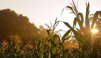 El clima registrado mejoró el estado de los cultivos de segunda en Santa Fe