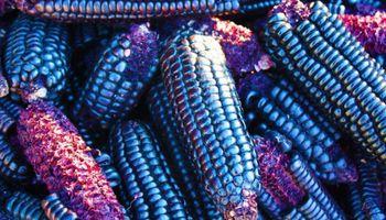 Del maíz azul a la proteína hidrolizada: la experiencia de asociarse para generar innovación