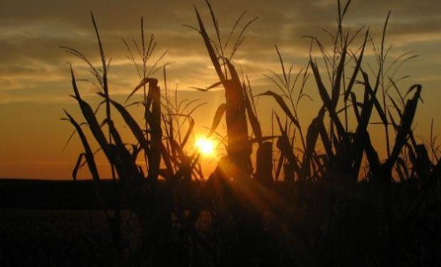 Bajas en Chicago, lideradas por el maíz.