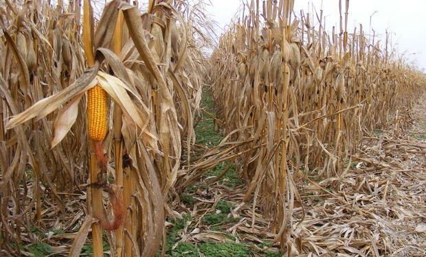 Operadores avizoran una gran cosecha en Estados Unidos.