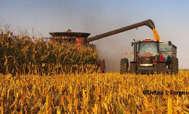 Bajas para soja, trigo y maíz en Chicago, con poco impacto local por la escasa oferta