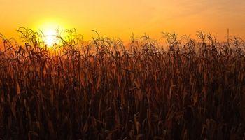 Un informe especial del Servicio Meteorológico Nacional advierte por altas temperaturas