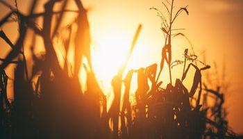Soja y maíz: la ola de calor consumió un 60% de las últimas lluvias en la región núcleo