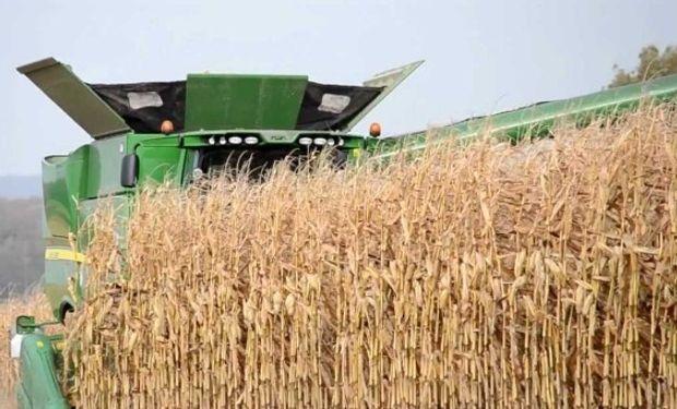 Sería récord la producción mundial de maíz 2016/17.