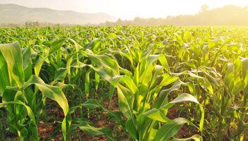 """Agroecosistemas: por qué la producción estaría ingresando en una """"etapa fascinante"""""""
