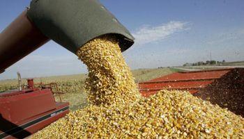 Se cubrió un 38% del cupo de exportación de maíz