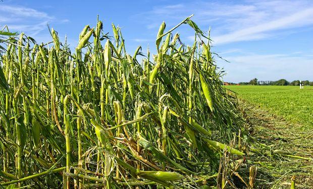 Riesgos agrícolas: el seguro forma parte de una buena cosecha