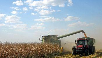 Amplio interés por el maíz disponible