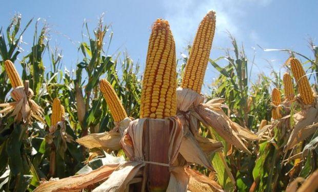 Cierra un mes positivo para el maíz en Chicago.