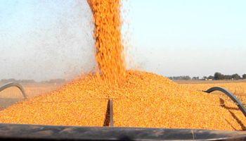 Sudeste de Buenos Aires: el resultado del maíz le gana a la soja