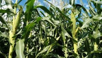 Todo listo para fabricar plásticos a partir de la soja y el maíz
