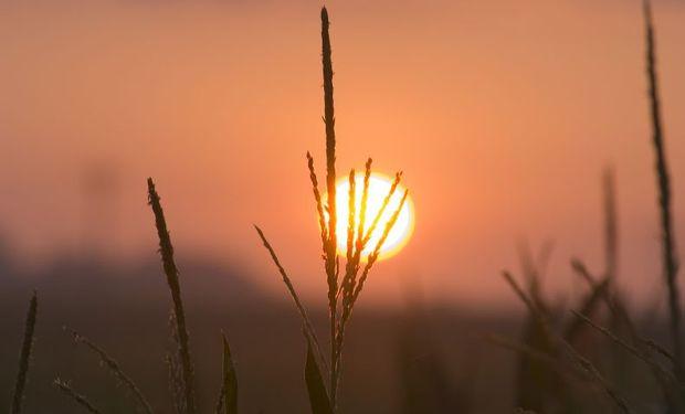 Maíz: una de las campañas más importantes en la historia del cultivo.