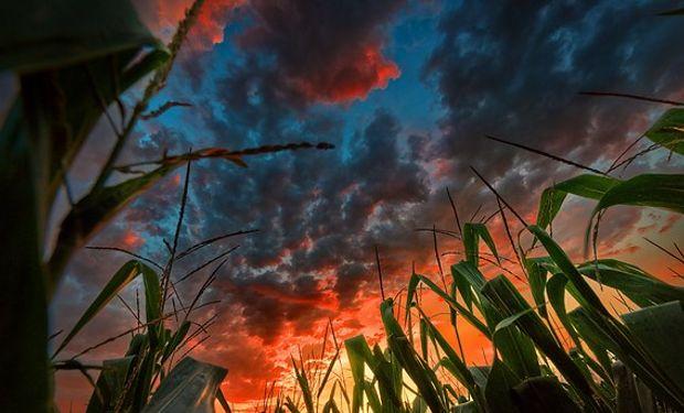 Estimaciones de la BCR para el maíz 2017/18.