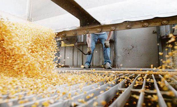 Más producción. La campaña pasada se cosecharon alrededor de 39 millones de toneladas de maíz y para 2017/18 se estiman 41 millones.