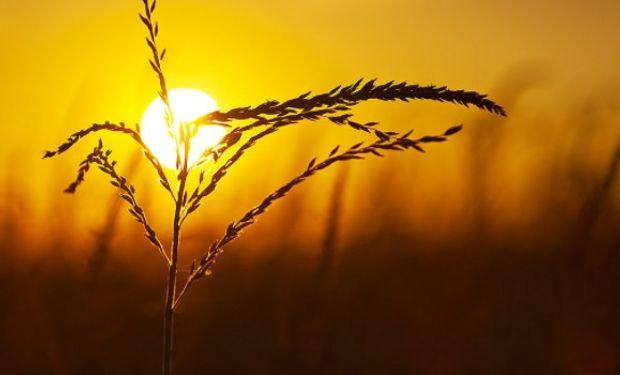 Productores fueron descubriendo en el maíz tardío una alternativa productiva muy buena.