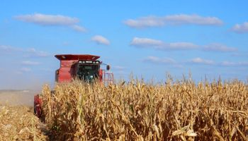 Agroindustria aprobó evento de maíz resistente a lepidópteros y coleópteros