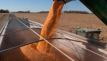 El maíz argentino, listo para reemplazar a Estados Unidos en México