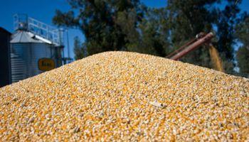 El Gobierno festejó un nuevo récord de exportaciones de maíz