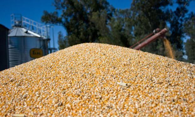 Desde 2016 la cosecha del cereal marcó dos máximos históricos.