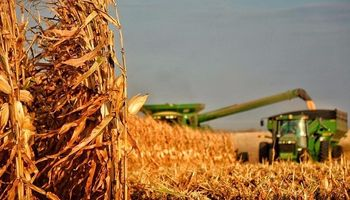"""Suma rechazos la medida contra el maíz: """"Demoler los cimientos del agro nunca puede desembocar en beneficios para los argentinos"""""""