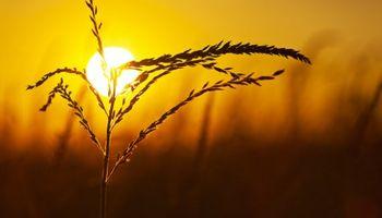 Nuevas subas para el maíz en Chicago