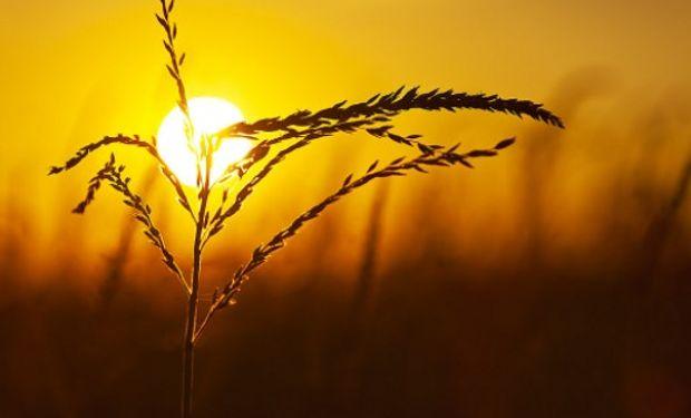 Los futuros de soja y maíz cotizaron en alza en la rueda de Chicago.