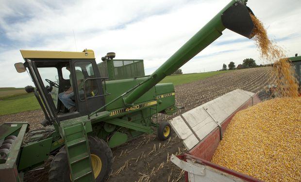 Cosecha de maíz sería de 21 millones de toneladas.