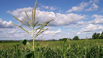 ¿Tendencia alcista para el maíz en Chicago?