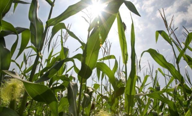 Soja y maíz, los productos más negociados