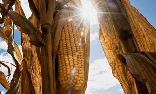 El sol sale bien fuerte para la vuelta del maíz al lote.