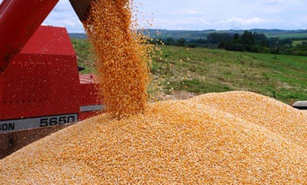 No vender maíz puede costarle caro a los productores brasileños