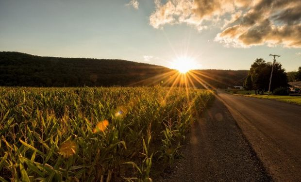 Nuevas subas para el maíz en Chicago en medio del ingreso de cosecha.