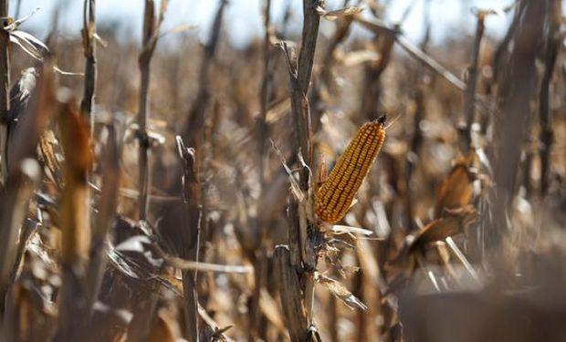 El maíz logró subir en Chicago.